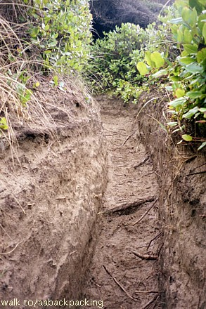 Hobbit Trail grows narrower and deeper as it reaches the beach